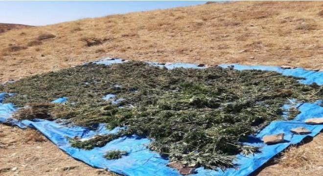 78 kilo kubar esrar ele geçirildi