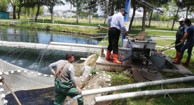 Erzurum Tarım ekonomisinde su ürünleri gündemi
