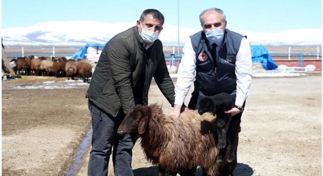 Erzurum çiftçisine destek ödemesi başlıyor
