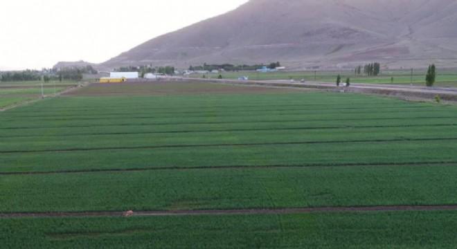 Erzurum'da 445.5 bin dekar tarım arazisi suyla buluştu